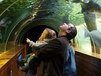 Design Aquarium Kast : Lakes aquarium aquarium windermere lake district